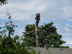 Tree going #5